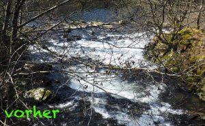 Fluss-wild